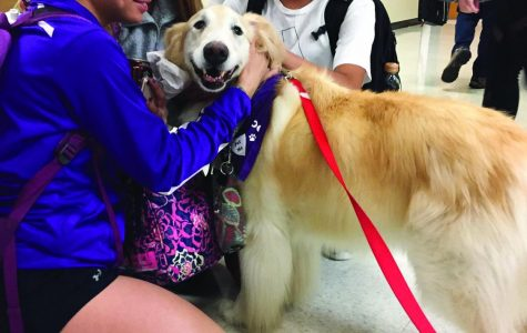 Students hand out with Scout and appreciate her companionship. photo courtesy of Sophia Blaha, Aaron Booe and Helena Lara