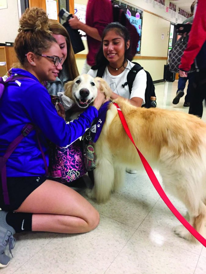 Scout, LASA's new therapy dog