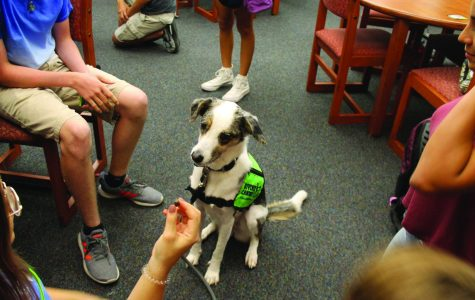 A paw to hold: relieving stress alongside furry friends