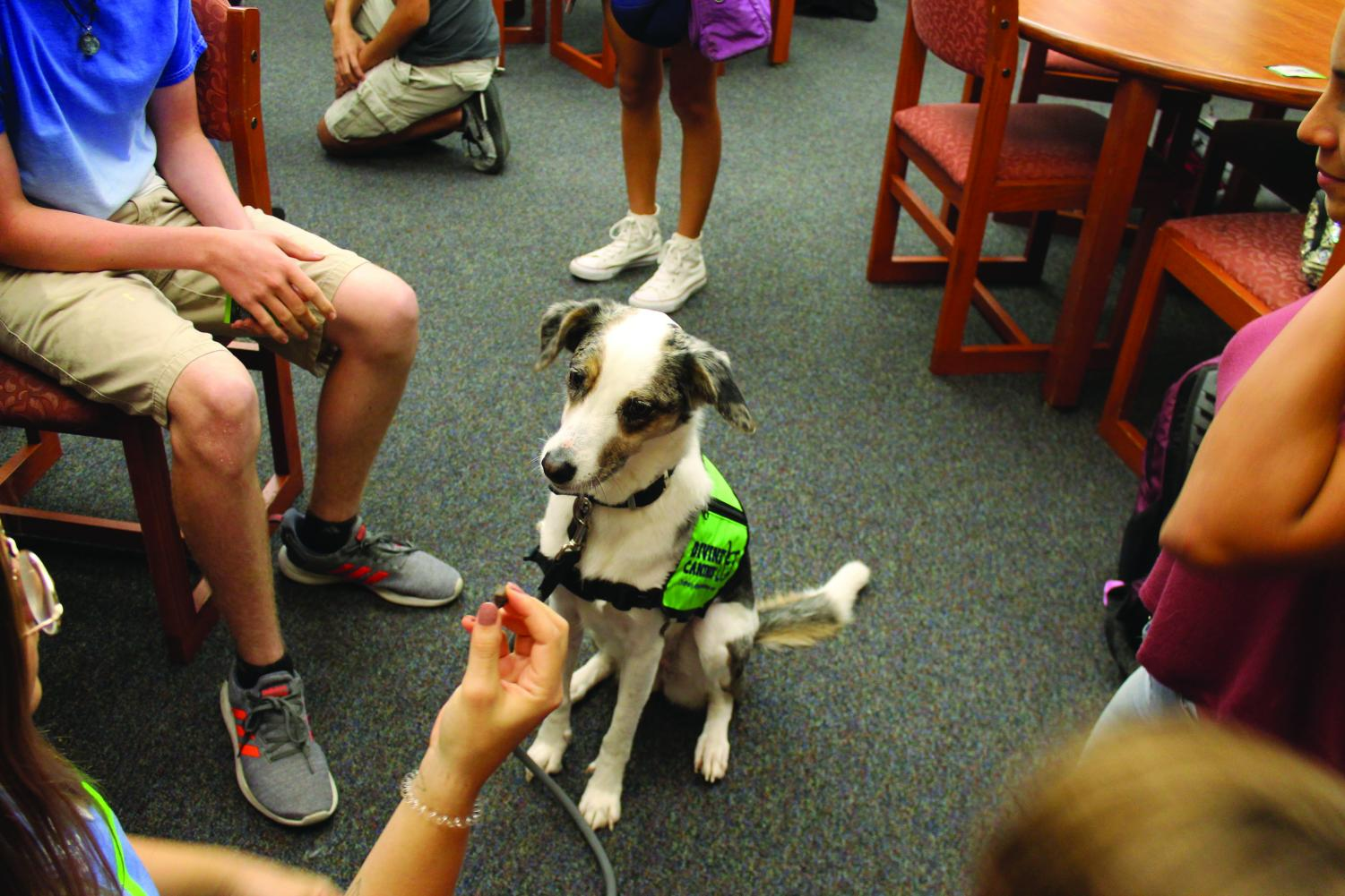 Therapy dog Harper and her handler Courtney Leonard demonstrate some of Harper's tricks to onlookers. Harper and Leonard visited LASA for the first time during Divine Canine's Oct. 9 study break, providing students with a chance to destress. photo by Emma McBride